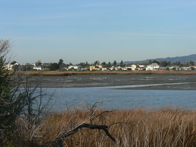 Along the beach in Alameda